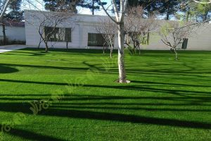 چمن مصنوعی باغ تالار ملک