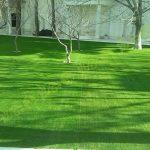 پروژه چمن مصنوعی باغ ملک 7