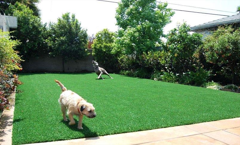 چمن مصنوعی برای سگ