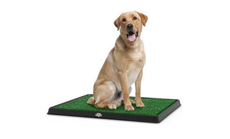 چمن مصنوعی برای حیوانات خانگی